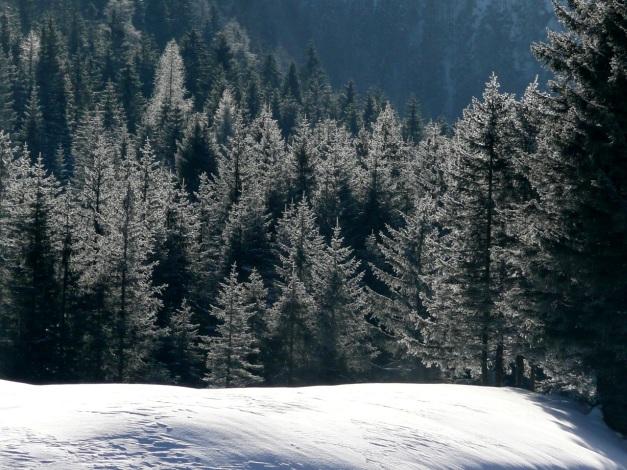 Foto: Manfred Karl / Ski Tour / Leckriedel, 1846 m / 30.01.2009 22:16:34