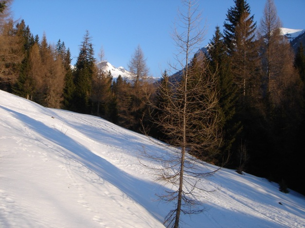 Foto: Manfred Karl / Ski Tour / Schwarzeck, Fuchskar / Am Forstweg zur Fuchshütte / 15.02.2009 14:27:44