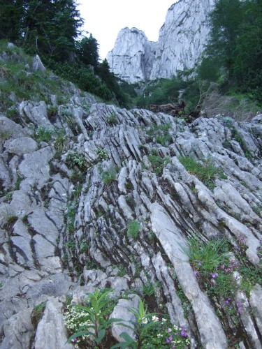 Foto: hofchri / Klettersteig Tour / Traunstein (1691 m) - Die Klettersteig-Quadrilogie / steile schroffe Rinnen im Aufstieg / 20.02.2009 20:09:44