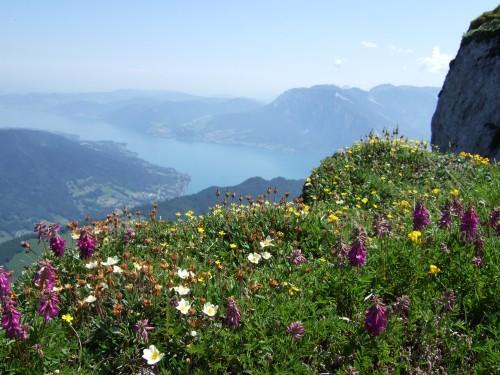 Foto: hofchri / Wander Tour / Schafberg (1782 m) von Winkl / Idylle am Gipfel / 28.02.2009 19:26:25