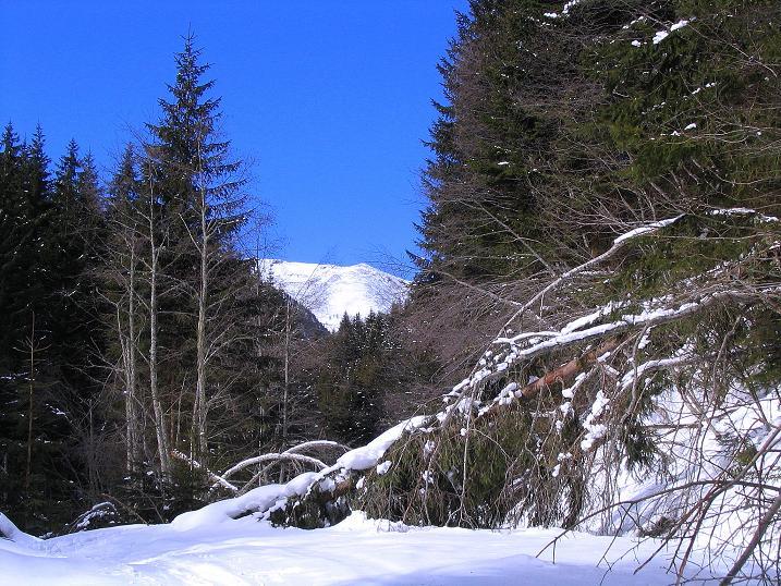Foto: Andreas Koller / Skitour / Über den Geiger auf den Kilnprein (2408m) / 11.03.2009 21:12:19