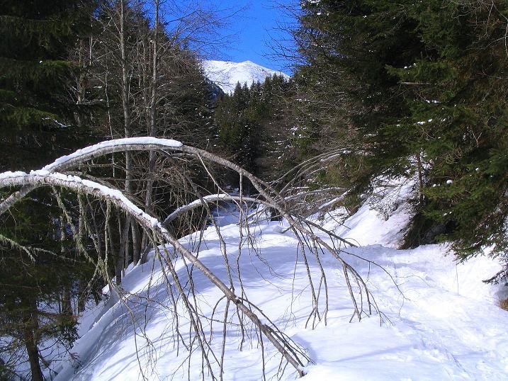 Foto: Andreas Koller / Skitour / Über den Geiger auf den Kilnprein (2408m) / 11.03.2009 21:12:07