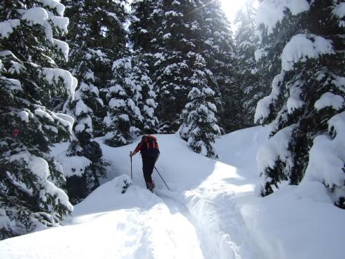 Foto: hofchri / Ski Tour / Kalkbretterkopf (2412m) von Angertal / im Wald / 09.03.2009 20:05:15