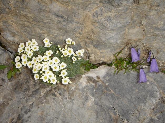 Foto: Manfred Karl / Klettersteig Tour / Cellon Via ferrata senza confine - Weg ohne Grenzen / 12.03.2009 21:33:31