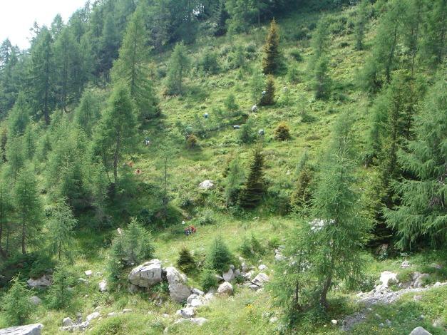Foto: Manfred Karl / Klettersteig Tour / Cellon Via ferrata senza confine - Weg ohne Grenzen / Es scheint jede Menge Heidelbeeren zu geben! / 12.03.2009 21:18:05