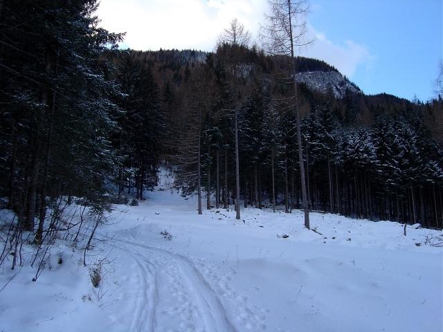Foto: Manfred Karl / Ski Tour / Watzmann Gugl, 1801 m / Kurz nach dem Verlassen der Forststraße / 15.03.2009 06:56:10