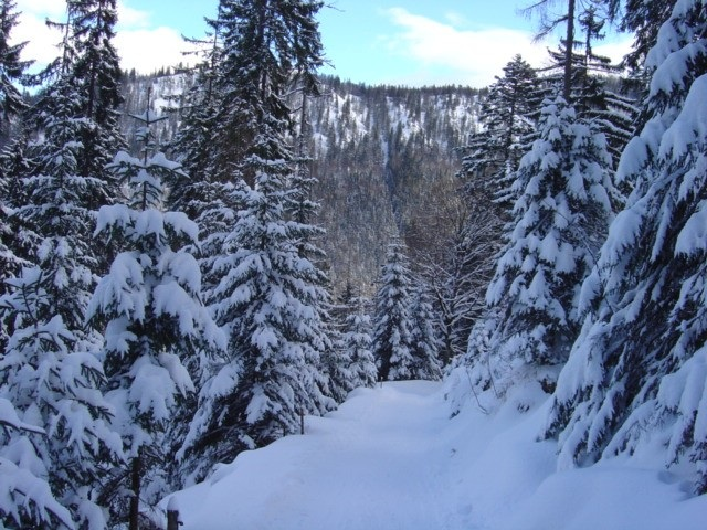 Foto: Manfred Karl / Ski Tour / Watzmann Gugl, 1801 m / Der Weg zur Stubenalm / 15.03.2009 06:50:20