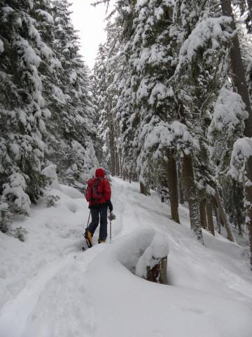 Foto: Wolfgang Lauschensky / Ski Tour / Gstoder über die Seetaler Hütten / am Westrücken / 14.02.2012 21:41:34