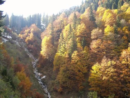Foto: hofchri / Mountainbike Tour / Rund um den Hochkranz über Kallbrunnalm (1495m) / 27.04.2009 22:18:29