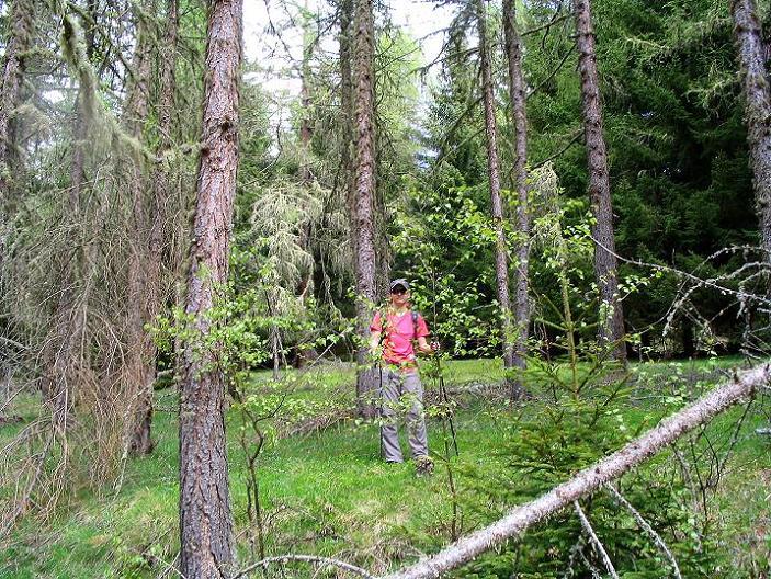 Foto: Andreas Koller / Wander Tour / Über die Dörfler Alm auf den Gstoder (2140m) / 10.05.2009 22:01:21