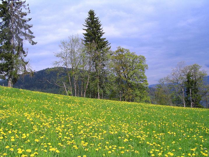 Foto: Andreas Koller / Wander Tour / Über die Dörfler Alm auf den Gstoder (2140m) / 10.05.2009 21:53:51