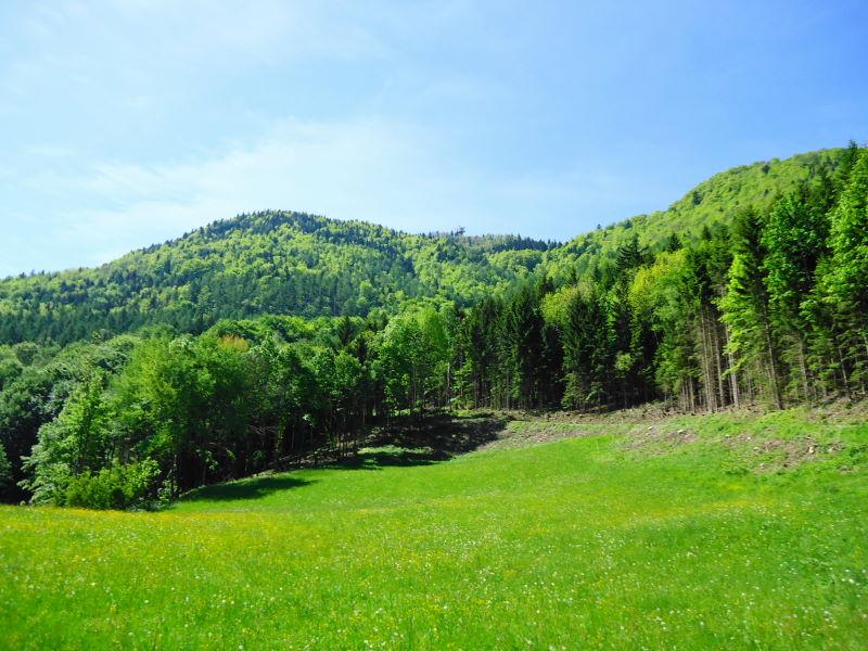 Foto: Günter Siegl / Wander Tour / Muckenkogel (1.248 m) und Hinteralm (1.313 m) / 29.05.2014 08:50:00