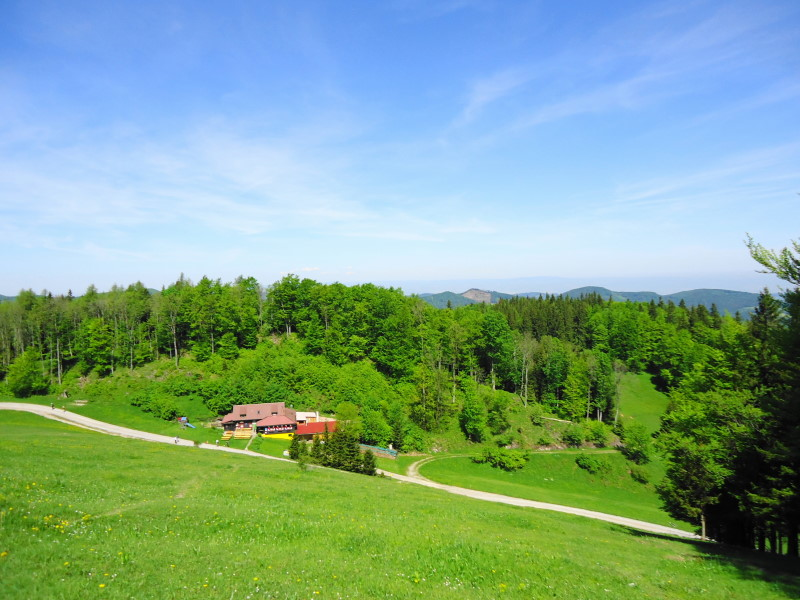 Foto: Günter Siegl / Wander Tour / Muckenkogel (1.248 m) und Hinteralm (1.313 m) / Lilienfelder Hütte / 29.05.2014 08:49:12