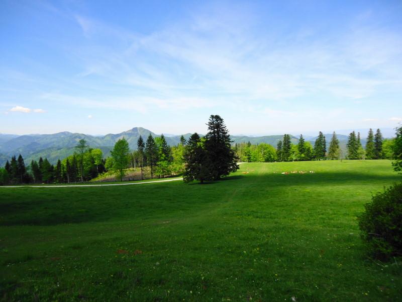 Foto: Günter Siegl / Wander Tour / Muckenkogel (1.248 m) und Hinteralm (1.313 m) / 29.05.2014 08:48:55