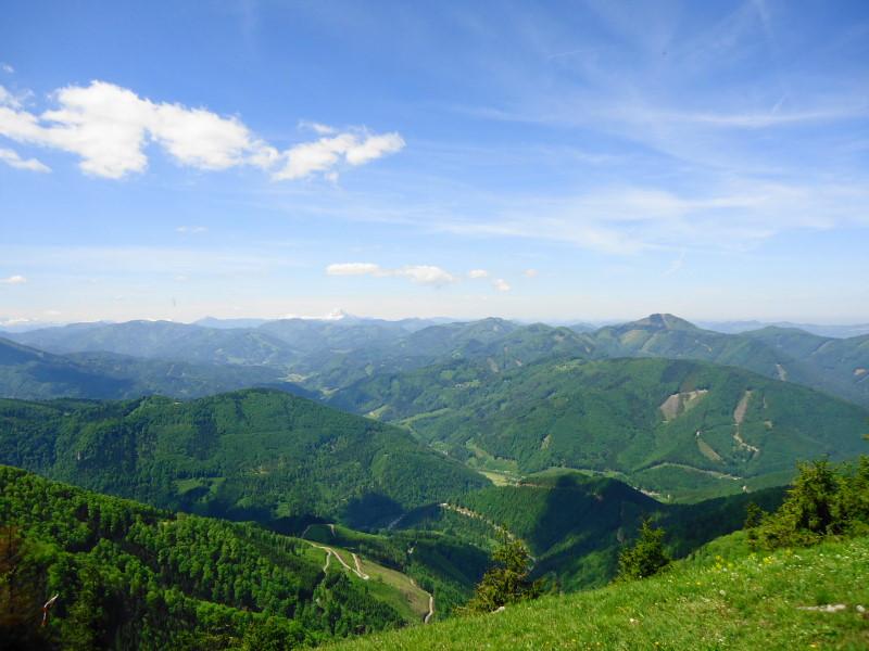 Foto: Günter Siegl / Wander Tour / Muckenkogel (1.248 m) und Hinteralm (1.313 m) / Ötscher-Blick / 29.05.2014 08:46:53