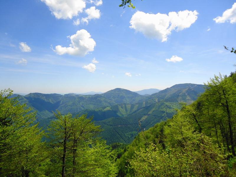 Foto: Günter Siegl / Wander Tour / Muckenkogel (1.248 m) und Hinteralm (1.313 m) / Hochstaff und Reisalpe / 29.05.2014 08:46:28