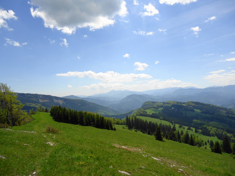 Foto: Günter Siegl / Wander Tour / Muckenkogel (1.248 m) und Hinteralm (1.313 m) / Schneeberg-Blick / 29.05.2014 08:44:43
