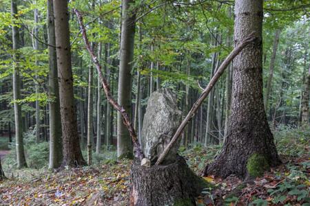 Foto: meinfal1 / Wander Tour / Höhenzug Ostrong und Peilstein (1.061 m) / 22.12.2015 23:51:29