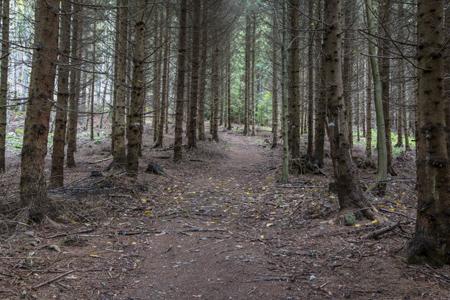 Foto: meinfal1 / Wander Tour / Höhenzug Ostrong und Peilstein (1.061 m) / 22.12.2015 23:51:21