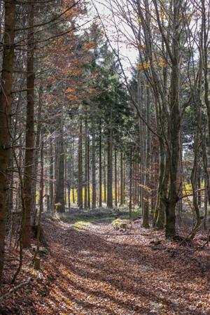 Foto: meinfal1 / Wander Tour / Höhenzug Ostrong und Peilstein (1.061 m) / 22.12.2015 23:51:05