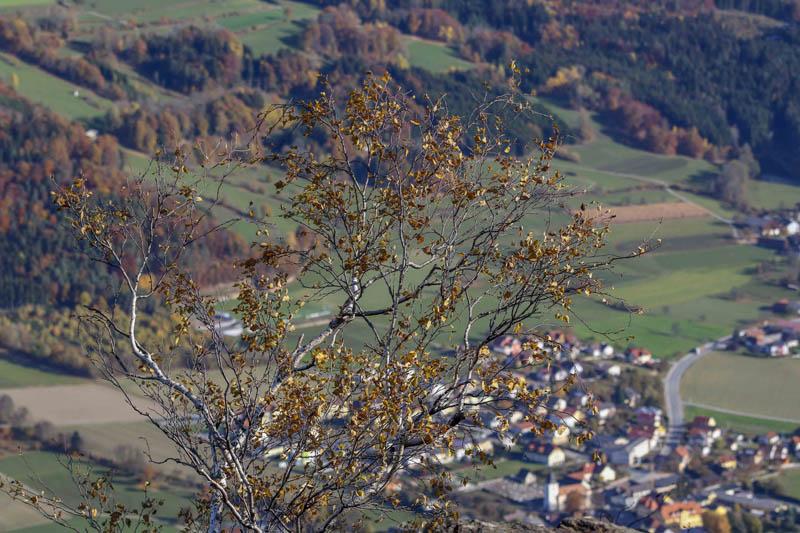 Foto: meinfal1 / Wander Tour / Höhenzug Ostrong und Peilstein (1.061 m) / 22.12.2015 23:49:29