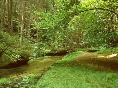 """Foto: Saechsische-Schweiz / Wander Tour / Wandertour mit Kahnfahrt """"Obere Schleuse"""" / 18.05.2009 10:56:43"""
