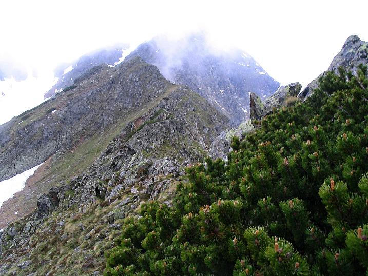 Foto: Andreas Koller / Wander Tour / Auf Gamsspuren über die Seekarspitze (2115m) / 07.06.2009 18:31:40