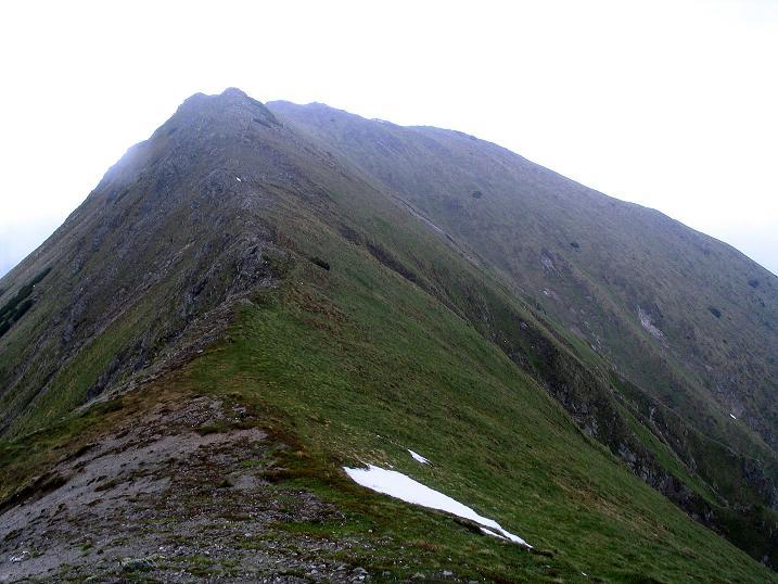 Foto: Andreas Koller / Wander Tour / Auf Gamsspuren über die Seekarspitze (2115m) / 07.06.2009 18:29:54