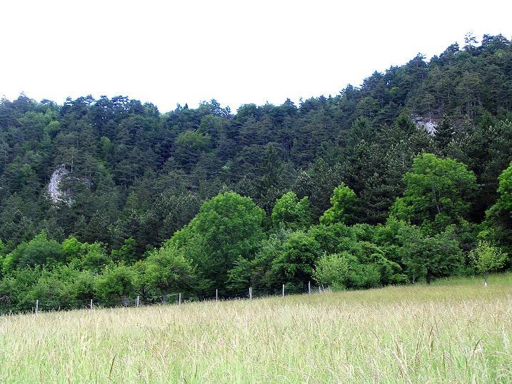 Foto: Andreas Koller / Klettersteig Tour / Klettersteig E 60 (758m) / Die Flatzer Wand, gut verdeckt durch die Bäume / 09.06.2009 00:01:31