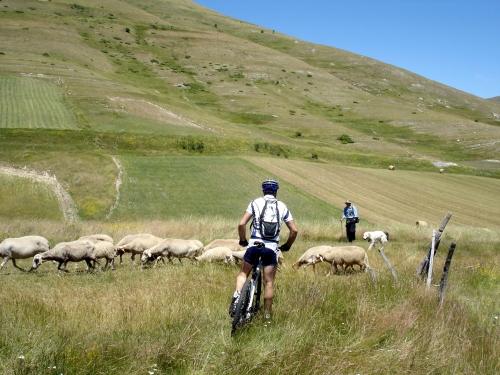 Foto: barbonis / Mountainbike Tour / Monte delle Rose / 20.06.2009 13:09:57
