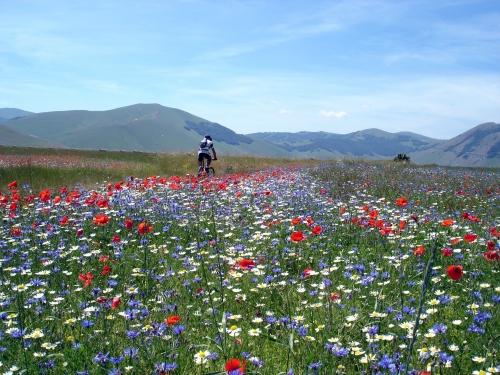 Foto: barbonis / Mountainbike Tour / Pian Perduto / 20.06.2009 16:09:03