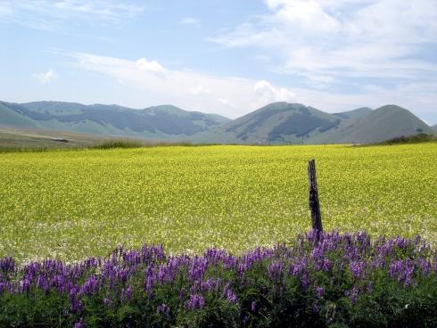 Foto: barbonis / Mountainbike Tour / Pian Piccolo / 20.06.2009 23:09:55