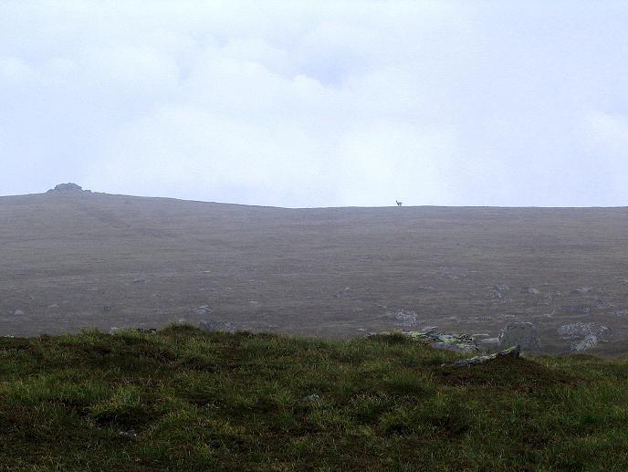 Foto: Andreas Koller / Wander Tour / Lavanttaler Impressionen auf der Koralpe (2140m) / Gämse X-ing / 01.07.2009 01:17:23