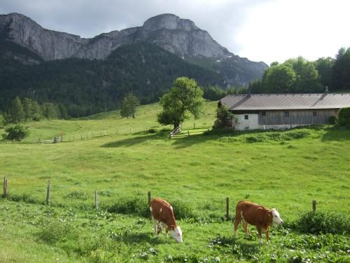 Foto: hofsab / Mountainbike Tour / Eisenaueralm (1015 m) mit Schwarzensee / unter dem Schafberg bei der Eisenaualm (1015 m) / 13.08.2009 20:42:14