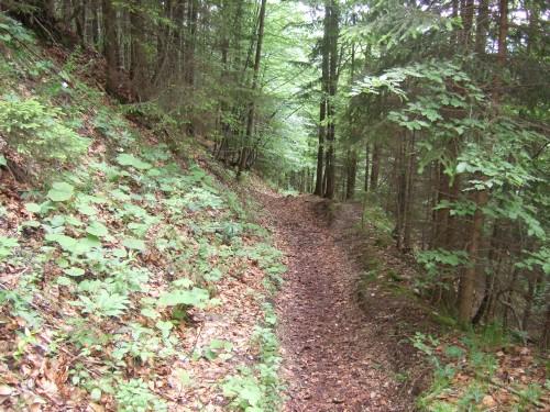 Foto: hofsab / Mountainbike Tour / Eisenaueralm (1015 m) mit Schwarzensee / hier noch super fahrbar / 13.08.2009 20:44:38