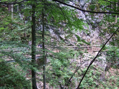 Foto: hofsab / Mountainbike Tour / Rund um und auf die Kampenwand (1664 m) / Aufahrt zur Kampenwand am steilen Reitweg / 13.08.2009 20:55:23