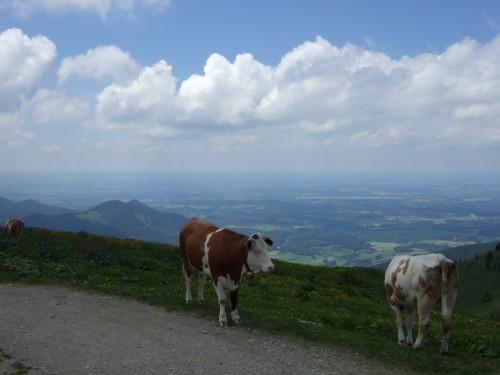 Foto: hofsab / Mountainbike Tour / Rund um und auf die Kampenwand (1664 m) / Panorama zum Chiemsee / 13.08.2009 20:58:20