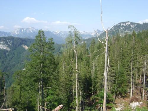 Foto: hofsab / Mountainbike Tour / Raschbergrunde (1390 m) über Blaa-Alm und Ewige Wand / der Wald lichtet sich / 13.08.2009 20:21:35