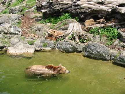 Foto: Ötschertrekker / Wander Tour / ÖTSCHERBÄRENTRAIL - 5 Tage Naturpark Ötscher Pur / Bären beim Baden / 02.07.2009 18:39:55