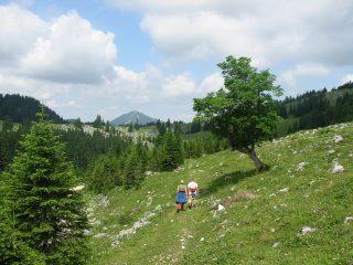 Foto: Ötschertrekker / Wander Tour / ÖTSCHERBÄRENTRAIL - 5 Tage Naturpark Ötscher Pur / Über die Almen / 02.07.2009 18:38:30