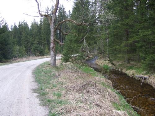 Foto: hofsab / Mountainbike Tour / Kobernaußerwaldrunde über Steiglberg (767 m) / am Riedlbach / 20.08.2009 12:52:00