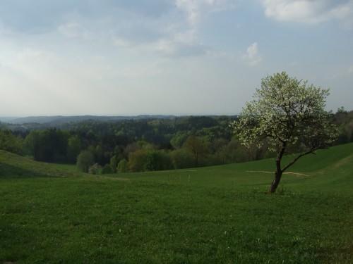 Foto: hofsab / Mountainbike Tour / Kobernaußerwaldrunde über Steiglberg (767 m) / Blick von Frauschereck ins Innviertel / 20.08.2009 12:47:32