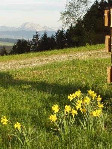 Foto: hofsab / Mountainbike Tour / Hausruckrunde über Göblberg (801 m) / in Hochlehen / 25.08.2009 12:28:05