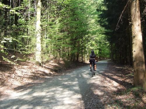 Foto: hofsab / Mountainbike Tour / Hausruckrunde über Göblberg (801 m) / der kühle Buchenwald / 25.08.2009 12:28:44