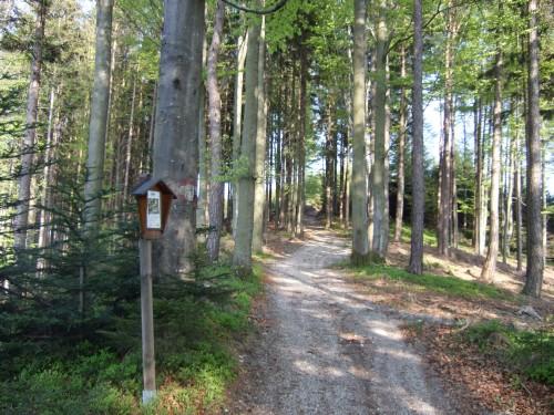 Foto: hofsab / Mountainbike Tour / Hausruckrunde über Göblberg (801 m) / die kurze, steilere Auffahrt zum Hengstberg / 25.08.2009 12:30:38