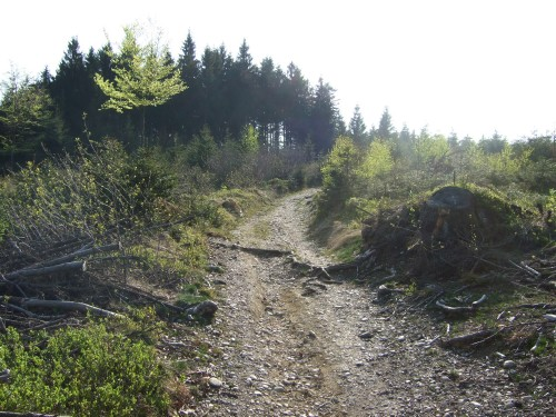 Foto: hofsab / Mountainbike Tour / Hausruckrunde über Göblberg (801 m) / 25.08.2009 12:31:41