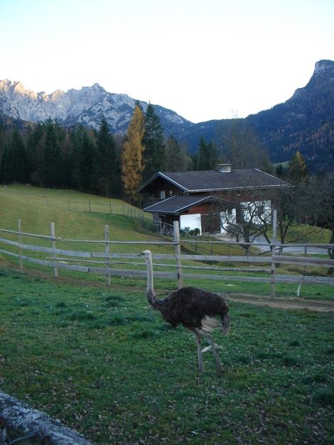Foto: Manfred Karl / Wander Tour / Wagendrischlhorn Klettersteig / Vorbei an der Straußenfarm / 31.08.2009 17:07:06