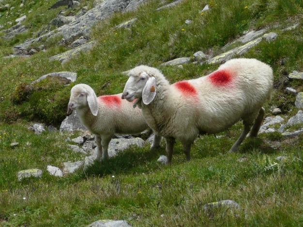 Foto: Manfred Karl / Wander Tour / Roteck – höchster Gipfel der Texelgruppe / 31.08.2009 15:26:14