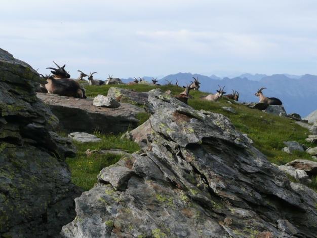 Foto: Manfred Karl / Wander Tour / Tschigat - markanter Gipfel über Meran / Keine Steinböcke! / 31.08.2009 15:19:12