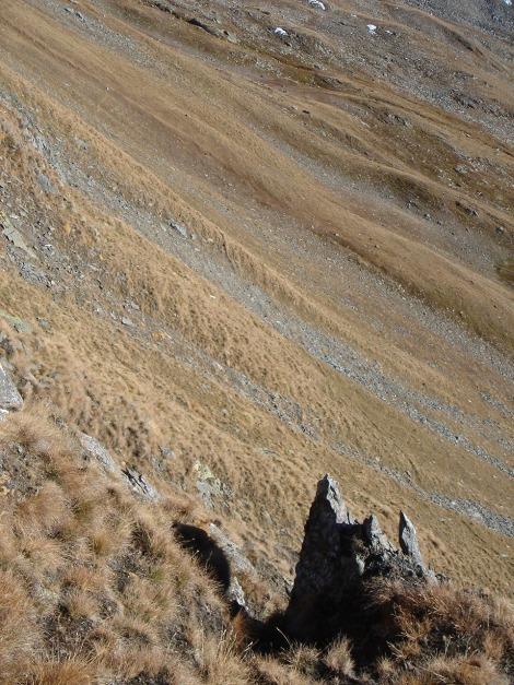 Foto: Manfred Karl / Wander Tour / Gratwanderung Böses Weibele – Tschadinhorn - Schönleitenspitze / Steilrasen im Anstieg zur Schönleitenspitze / 31.08.2009 20:12:48